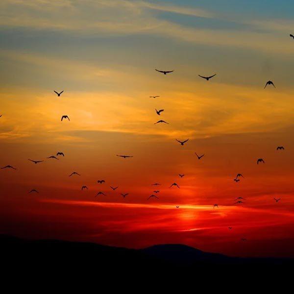 Acapella Sunrise